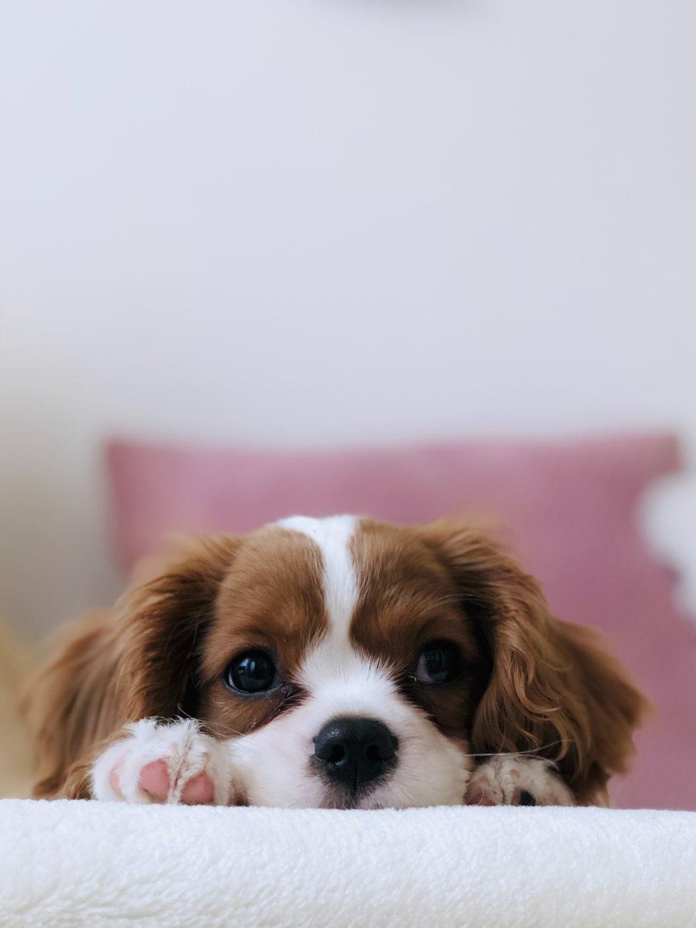 Vad din djuraffär kan göra för dig